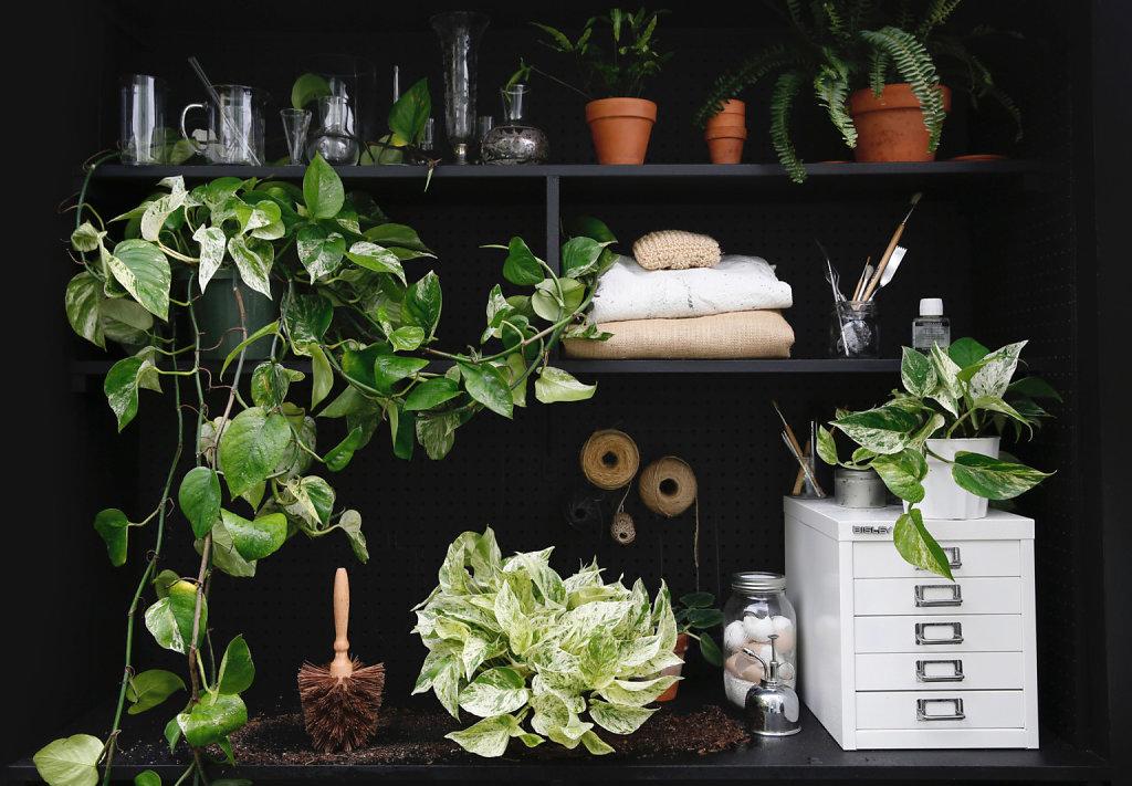 pothos-tropical-houseplants-leslie-santarina-2-1536x1066.jpg